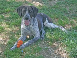Archibald - Adopté en décembre 2011