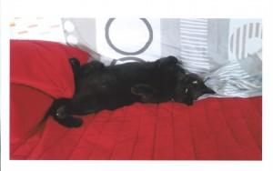 """Joëlle et Jérôme nous envoient cette photo d'Alberto, adopté il y a un an, avec ce commentaire, qui veut tout dire : """" Alberto est le premier chat adopté et ne sera pas le dernier."""" Toute la famille se prépare à déménager en Savoie."""