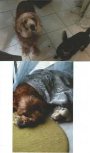 Alix, adopté par Pascal le 1er octobre 2010, avec ses jouets et sa couverture douillette, et le même copinant avec Lisa.