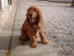 Alix - Adopté en octobre 2010