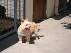 Angie - Adoptée en août 2011