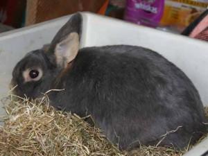 Armand - Adopté le 28 avril 2008