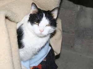 Arsène - Adopté en janvier 2008