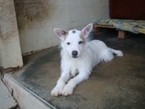 Attila - Adopté en août 2013