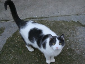 Aurélia - Adoptée en août 2009