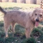 Babouche - Adopté fin juin 2008