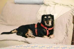 Baudoin dispose d'un canapé personnel
