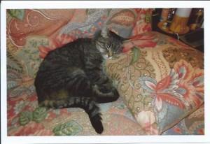 le chat Beedy sur le canapé