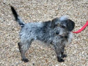 Belle - Adoptée en mars 2011