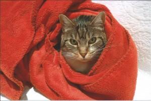 Bibou, adoptée le 14 janvier 2012, adore se lover dans les affaires de sa maîtresse Christelle.