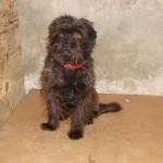 Bobby - Adopté en septembre 2009