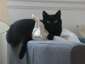 Calliste ne sait pas choisir entre le canapé et l'oreiller : il prend les deux !