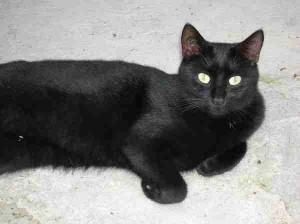 Calliste - Adopté en mai 2009