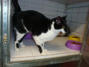 Calypso - Adoptée en mai 2012