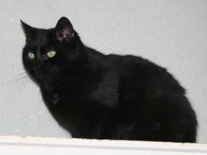 Capucine - Adoptée en août 2008
