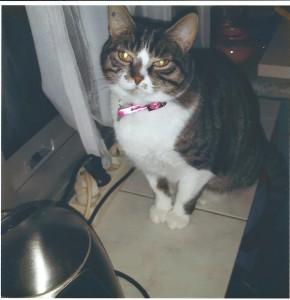 Sophie nous envoie cette photo de Clarisse, adorable et très câline, qui s'entend à merveille avec Bounty, le petit chien de la maison.