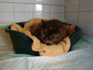 Clio - Adoptée en janvier 2013