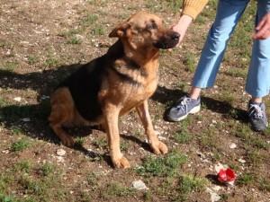 Colline - Adoptée en décembre 2009