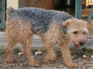 Eliott - Adopté en janvier 2010