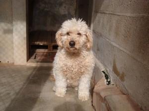 Fanny - Adoptée en juillet 2010