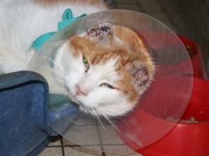 Freddy - Adopté en décembre 2007