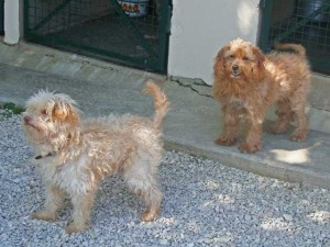 Gédéon et Sidonie - Adoptés en décembre 2010