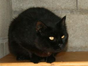 Geoffroy - Adopté en décembre 2008