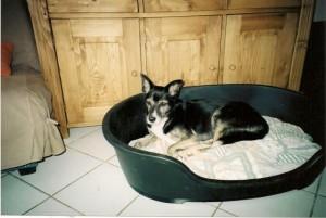 Gigi, heureuse et paisible, dans son nouveau foyer.