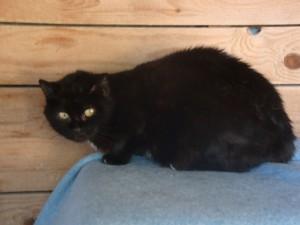 Gisèle - Adoptée en mai 2013