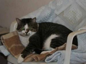 Gribouille-Rudy - Adopté le 7 juillet 2008