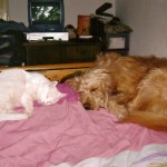 Et il s'entend à merveille avec le chien Fernand, adopté au refuge