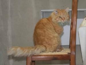 Harold - Adopté en décembre 2007