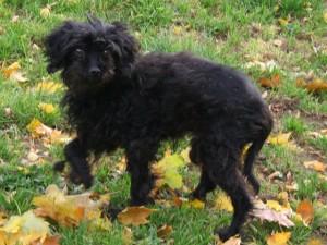 Heidi - Adopté en Novembre 2008