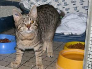Hubert - Adopté en février 2008