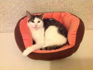 pearl, chatte adoptée en avril 2013