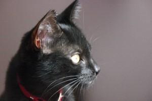 La petite chatte Juliette ex Christilla, coule des jours heureux chez une maîtresse très bienveillante