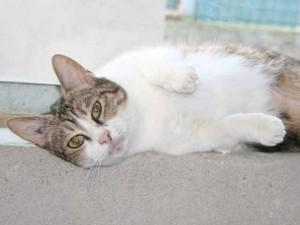 Jerry - Adoptée en mai 2008