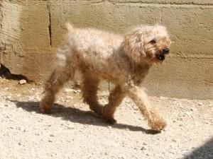 Jumpy - Adopté le 1er décembre 2007