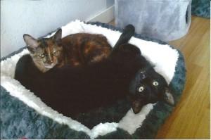 Jupiter et Maya apprécient le confort douillet que leur adoptante leur a préparé.