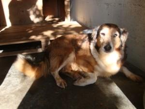 Kessy - Adoptée en juillet 2012