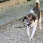 Lambert - Adopté en décembre 2008