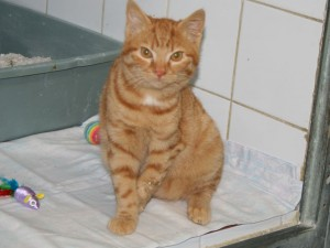 Leslie - Adoptée en janvier 2009
