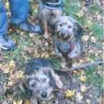 Lilou, avec Donna et Loustic, ses deux compagnons