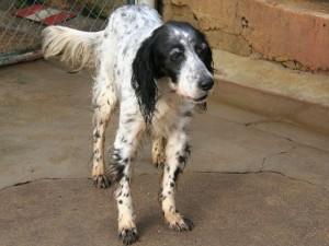 Lina - Adoptée en mai 2009