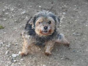 Linette - Adoptée en décembre 2007