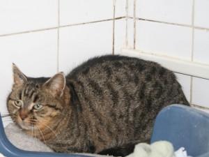 Magali - Adoptée en août 2010