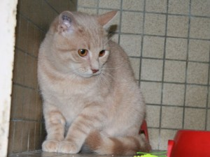 Malo - Adopté en janvier 2010