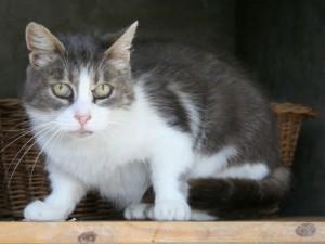 Mazarine - Adoptée en mars 2009