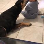 """""""Le chien Noël, adopté en avril 2017, et le fils de ses adoptants, charmant petit garçon âgé d'un an, sont très attachés l'un à l'autre"""""""