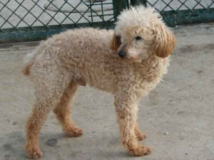 Nao - Adopté en janvier 2011